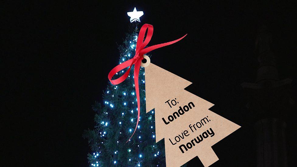 The Christmas tree in Trafalgar Square in London